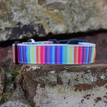 Handmade Rainbow Stripe Dog Collar (Gay Pride)