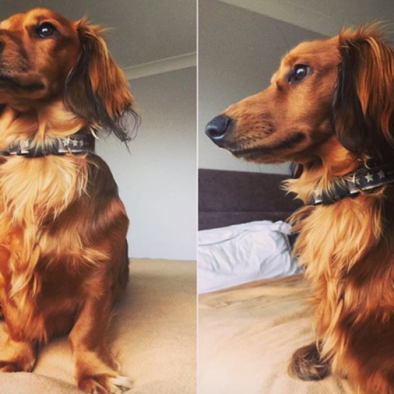 Christmas Dog Collar, Handmade Dog Collar, Albert the Doxie