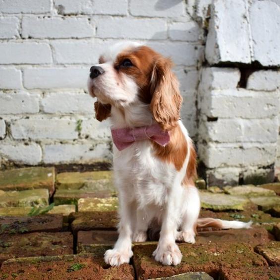 Bow Tie, Handmade Dog Accessories