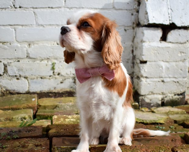 Dog Lead, Handmade, pink marl, Dog Accessories