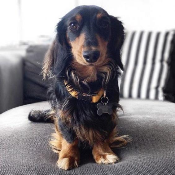 handmade, dog collar, mustard, corduroy, dog accessories