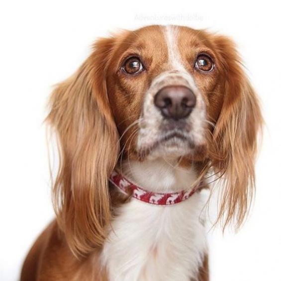 dog accessories, dog collar, handmade, festive range, christmas