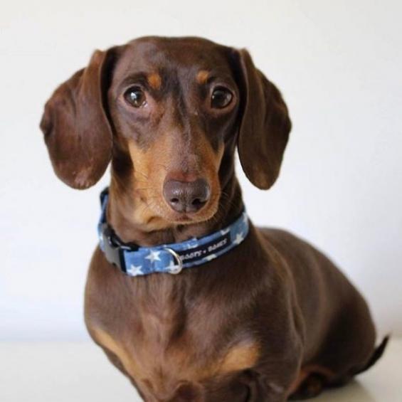 handmade, dog collar, bow tie, dog accessories, denim