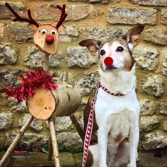 dog accessories, dog collar, handmade, festive range, christmas, dog lead