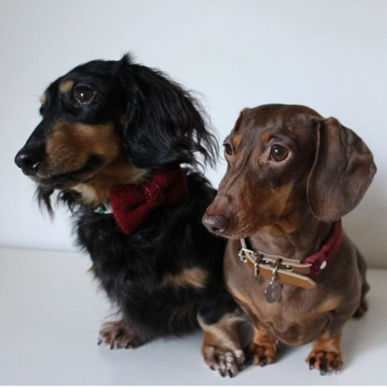 dog accessories, dog collar, handmade, velvet, leather
