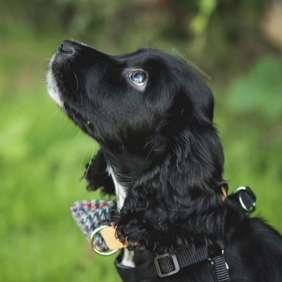 handmade, dog collar, bow tie, dog accessories