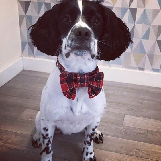 handmade, dog collar, bow tie, dog accessories