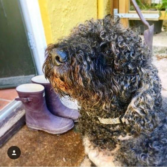 dog accessories, dog collar, handmade, tweed, winter range
