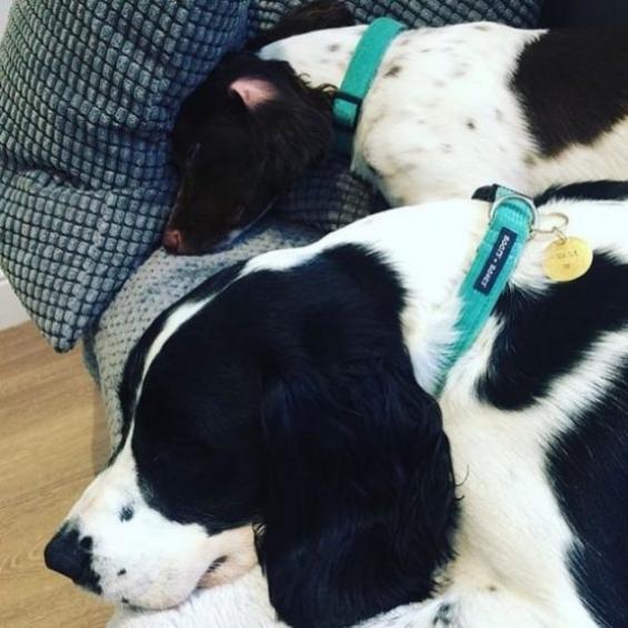 dog accessories, dog collar, handmade, teal, corduroy