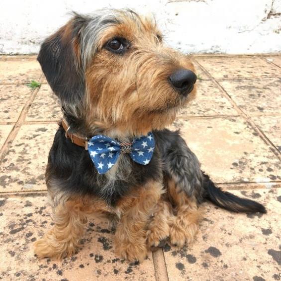 Denim stars, denim tweed collar, leather dog collar, handmade, dog accessories