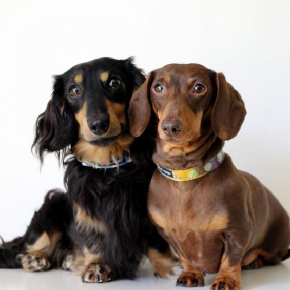 Luxury Handmade Dog Collar by Boots & Bones, Denim Stars and Tie Dye from the Summer Range