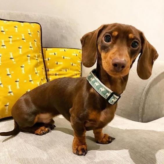 Christmas Dog Collar, Handmade Dog Collar