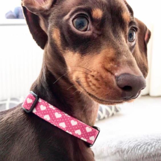 Be My Valentine, Dog Collar, Handmade Dog Collar, Heart Dog Collar