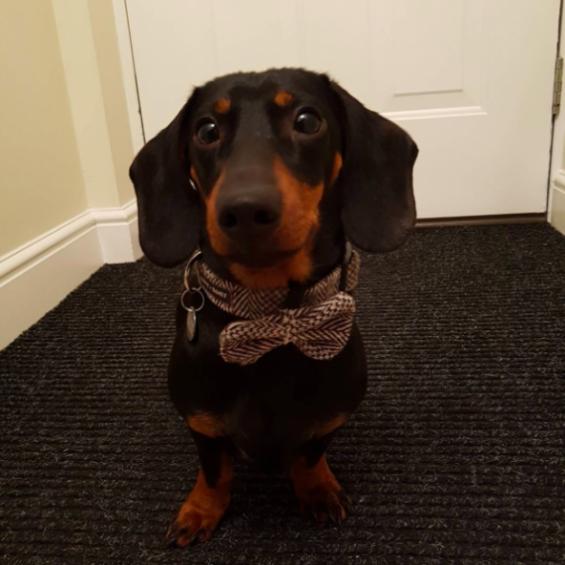 Tweed Dog Collar, Dog Collar, Handmade Dog Collar
