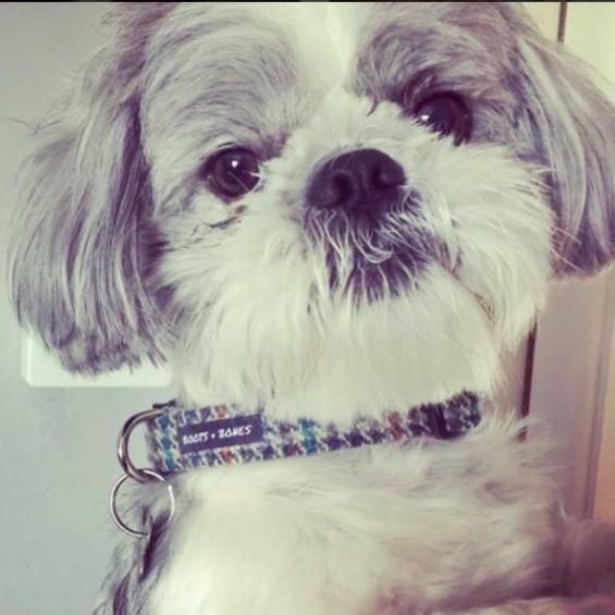 Tweed, Dog Collar, Handmade Dog Collar, Dog Accessories