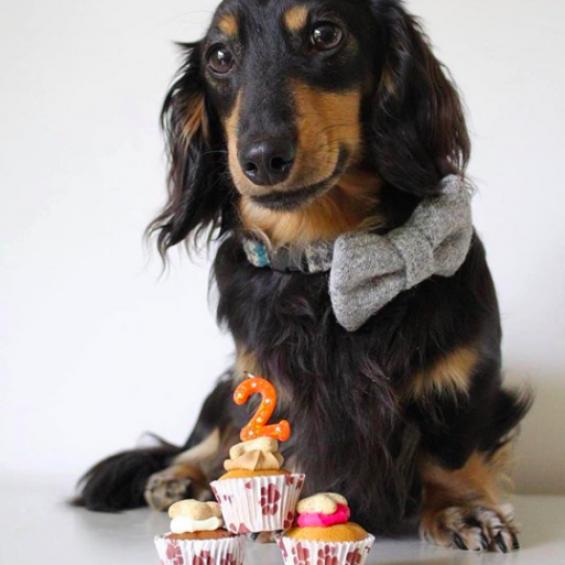handmade, dog collar, lead, accessories, tweed, dogtooth