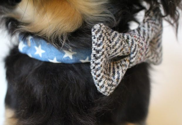 handmade, dog accessories, dog bow tie, dog collars, dog accessories, tweed, dog bow tie