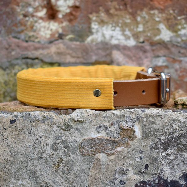 Mustard Corduroy Dog Collar, yellow, mustard, spring range, handmade, dog collar, corduroy collar, dog accessories, leather