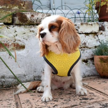 dog harness, bananarama, handmade, british, dog accessories