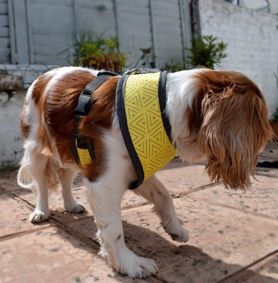 dog harness, bananarama, handmade, british, dog accessories