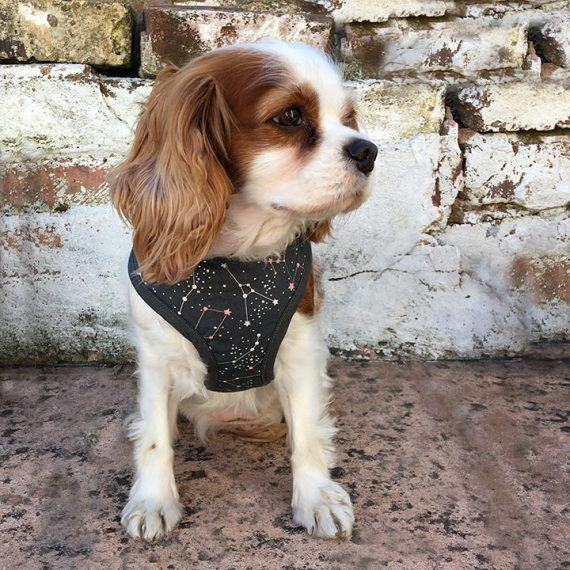 dog harness, constellation, handmade, british, dog accessories