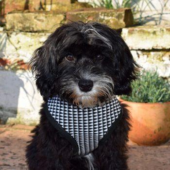 dog harness, harlequin, handmade, british, dog accessories